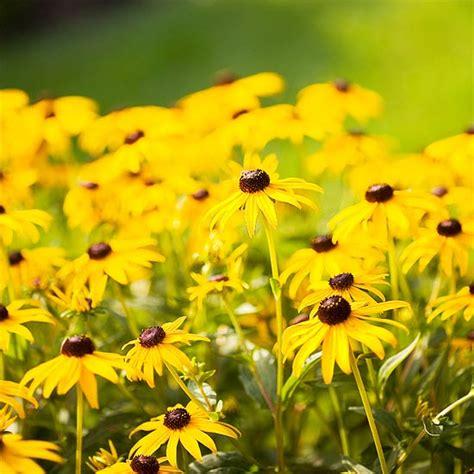 stauden die den ganzen sommer blühen 17 blumen und pflanzen die schmetterlinge im garten