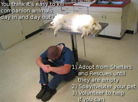 kill shelters animal overpopulation quotes