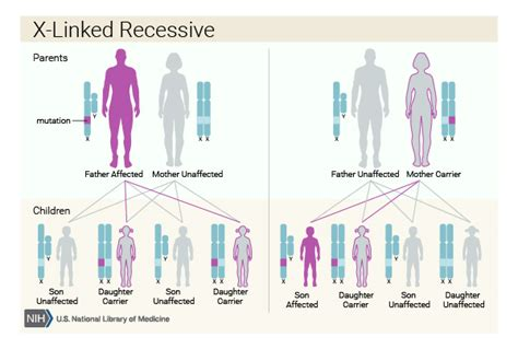 muscular dystrophy pattern of inheritance if a genetic disorder runs in my family what are the
