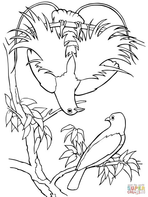 coloring pages bird of paradise blue bird of paradise coloring page free printable