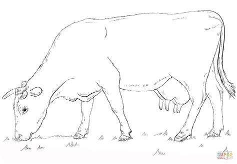free printable coloring in pages cow coloring pages images cow coloring page printable