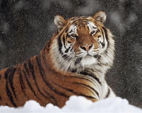 imagenes de animales para descargar descargar imagenes tiernas gratis imagenes tiernas fotos