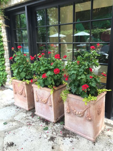 container gardening flowers flower container gardening ideas