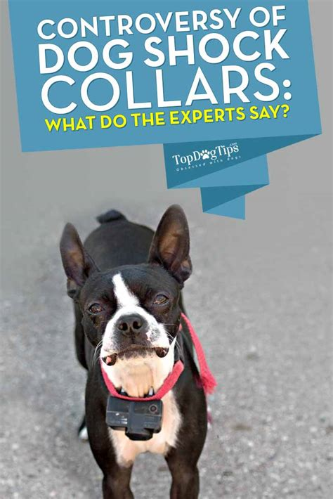 what do dogs say shock collars controversy what do the experts say top tips
