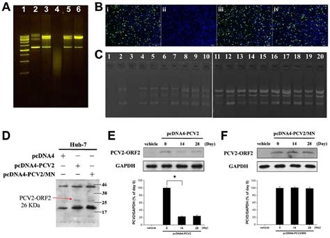 vaccine stability at room temperature self assembly dna polyplex vaccine inside dissolving microneedles for high potency intradermal