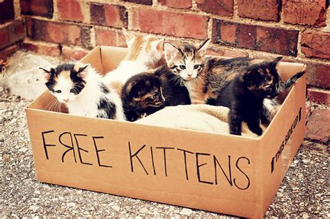 Puppy Giveaway Near Me - box cats cute free kittens image 98276 on favim com