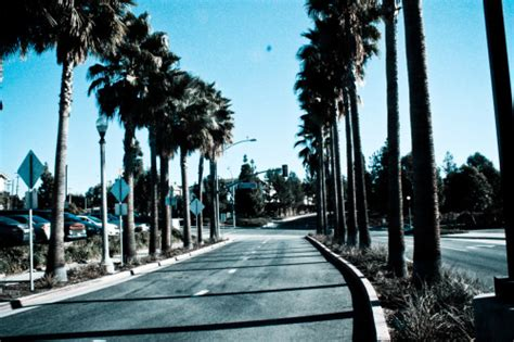 wallpaper california tumblr california palm trees tumblr