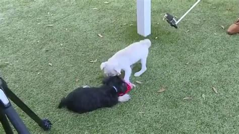 special needs dogs for adoption special needs puppies available for adoption from spca ta bay wtsp