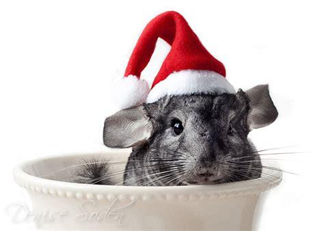 merry christmas  denisesoden  deviantart