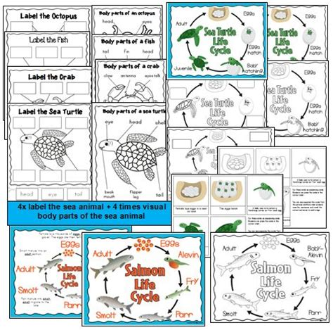 biography lesson plans for kindergarten free lesson plans for kindergarten science life science