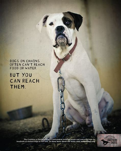 Psa Support Pets Alive by Psa C Coalition To Unchain Dogs