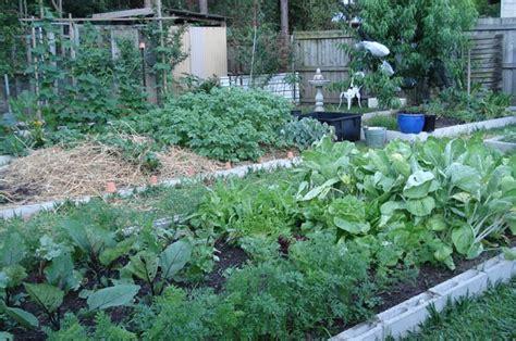 starting vegetable garden to earth starting your vegetable garden