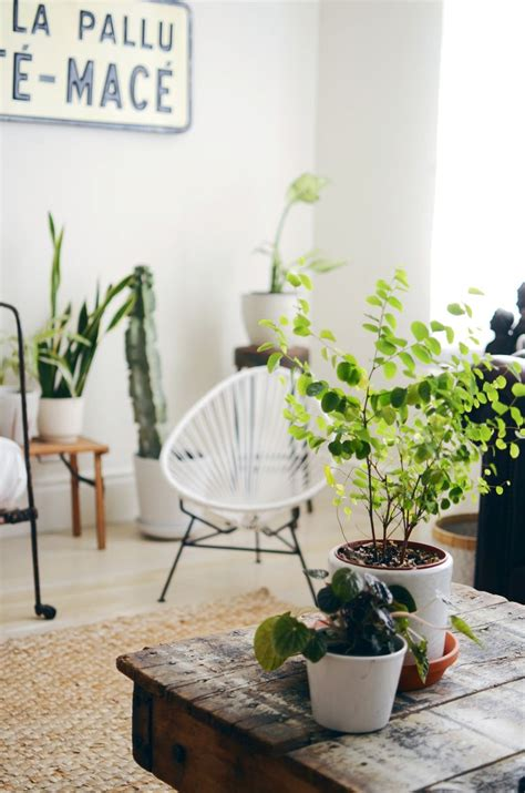 keep out of room indoor tips for keeping indoor plants alive a beautiful mess