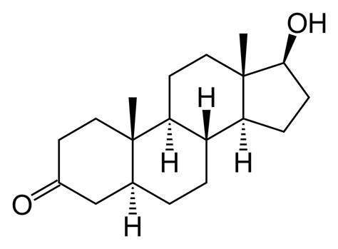 dht dihydrotestosterone what is dht s role in baldness dihydrotestosterone wikipedia