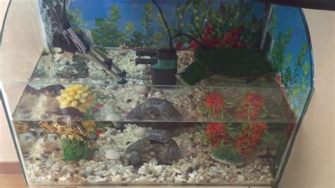 lade per tartarughe d acqua tartarughe d acqua dolce
