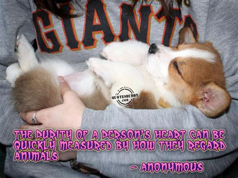 Animal Quotes Picture Clip Pictures Animal Quotes Animal