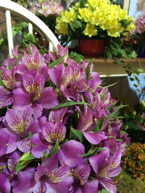 International Flowers by 2016 Melbourne International Flower Garden Show