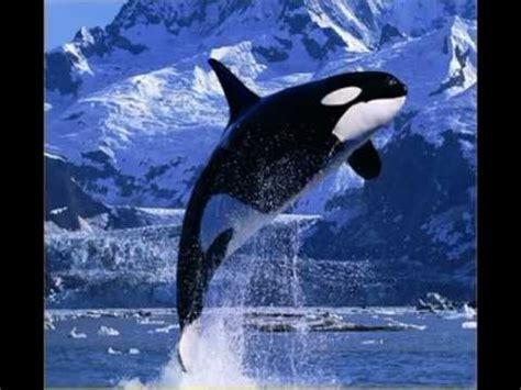 imagenes navideñas las mejores las mejores fotos de animales national geographic con