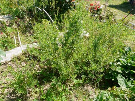 kleine kräutergarten design k 252 che kr 228 uter idee