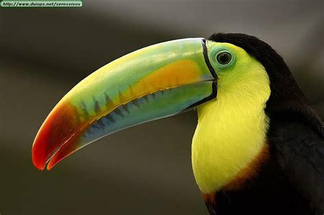 Brazílie Kostarika Fotos De Tucanes