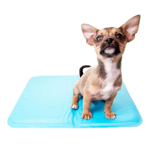cooling bed for dogs cooling dog pad dog beds for large dogs at glamourmutt com