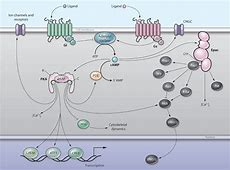 Pharmacological PKA Inhibition: All May Not Be What It ... G Protein Coupled Receptors Diagram