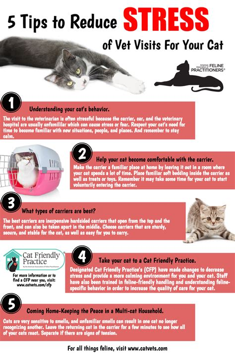 8 Tips On How To Choose A Vet For Your Pet by 5 Tips To Reduce Stress Of Vet Visits For Your Cat Bloor