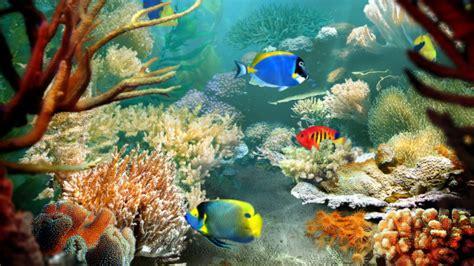 best fish screensaver the best screensavers i seen intechmania