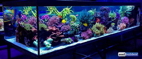 Aquascape World The Supernatural Reef Tank Of Seabox Aquarium Coral