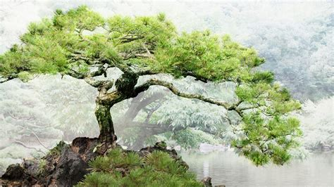 ponds bonsai wallpaper 1920x1080 191757 wallpaperup