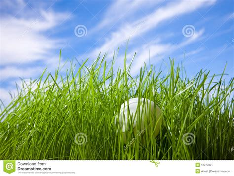 pas grass swinging table tennis ball hidden in grass stock image image
