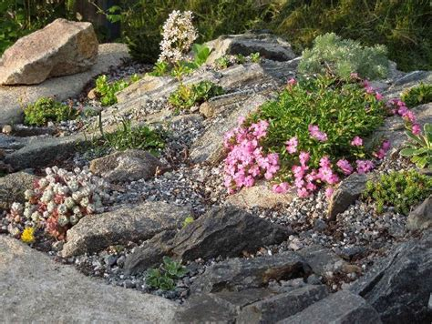 Alpine Rock Garden 154 Best Images About Rock Gardens On Pinterest Gardens Landscaping And Drought Tolerant