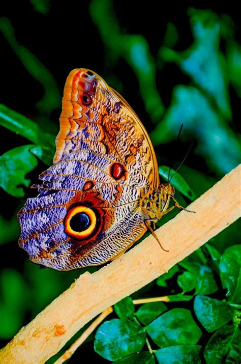 by chris oliphant on 500px amazing photos pinterest chris brown butterfly by chris taylor on 500px animales