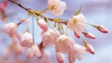 Weiß Blühende Blumen 789 by Die 64 Besten Blumen Hintergrundbilder