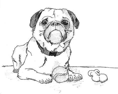 pictures of puppies to draw drawing exploration 2 flickr photo