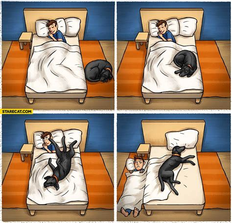 sleeping with dogs when sleeping with a starecat