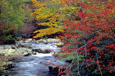 smoky mountains fall colors great smoky mountains in the fall autumn splendor