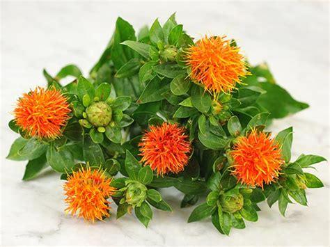 safflower dark orange red baker creek heirloom seeds