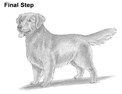 how to draw a golden retriever how to draw a golden retriever
