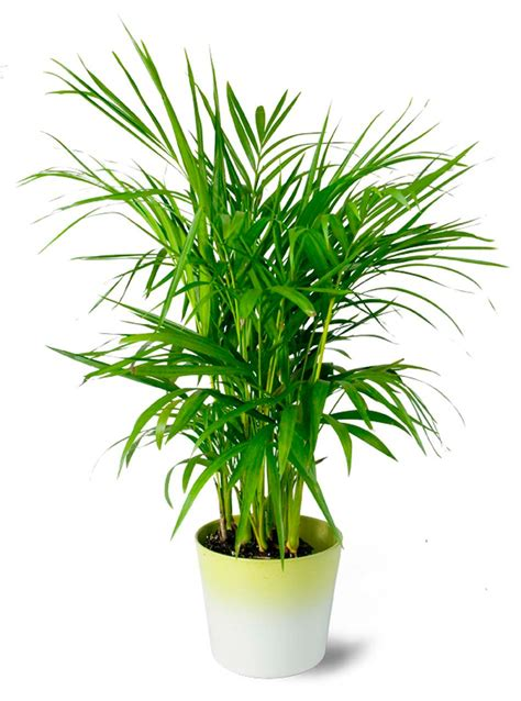 Plante Bambou Dans Salle De Bain by D 233 Coration Salle De Bain 224 L Aide D Utiles Et Belles