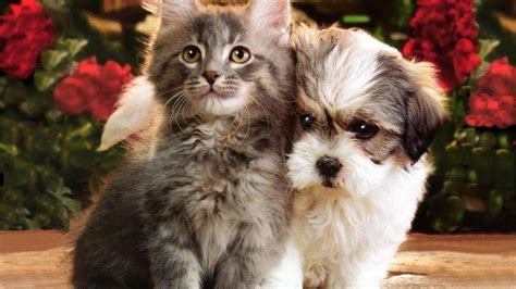 wallpaper cat and dog hd free cats and dogs hd cats wallpapers free download
