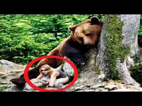 Animal Planet World S Most Dangerous Animals 12 most dangerous animal attacks on human in the world