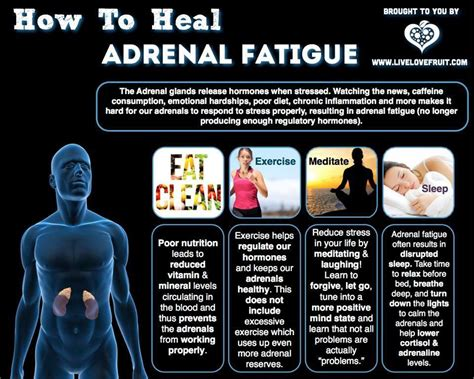 Adrenal Detox Program by Help Adrenal Fatigue Adrenal Fatigue Thyroid