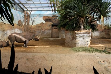 rhino house magdeburg zoo africambo rhino house zoochat