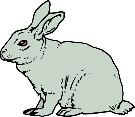 animated rabbit wallpaper animated rabbits images dowload