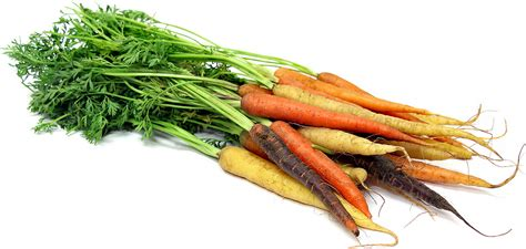colored carrots colored carrots information and facts