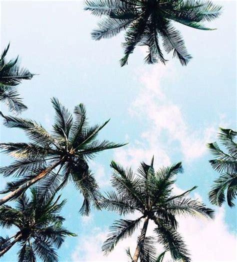 summer vibes palm trees hd pinterest vivalavitaa snapchat sandramiron instagram