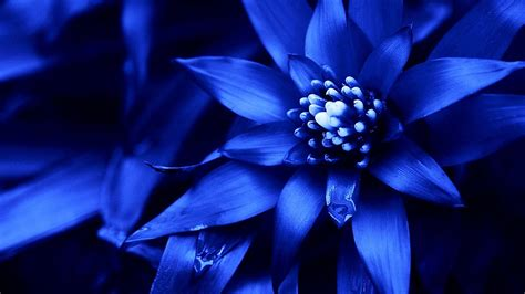 Blue Flowers by Beautiful Flowers Arrangement With Blue Purple Green Black
