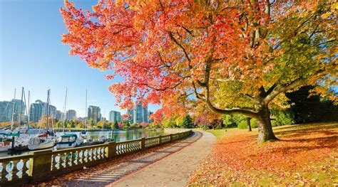 places   fall leaves    vancouver curated