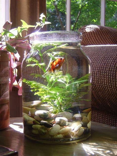 stunning plant vase fish tank decorative vase ideas